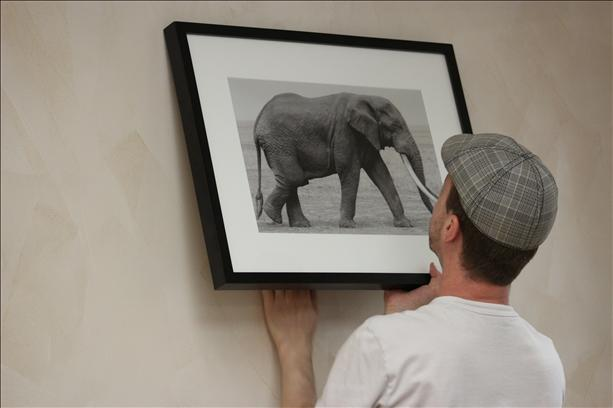 Hanging elephant print at Timothy Forbes Photography Artomatic exhibit